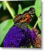 American Lady Butterfly Metal Print