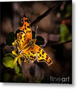 American Lady Metal Print by Robert Bales