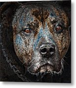 American Mastiff Metal Print