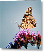 American Painted Lady Butterfly Blue Background Metal Print