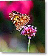 American Painted Lady Butterfly Pink Metal Print