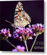 American Painted Lady Butterfly Purple Background Metal Print