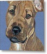 American Pit Bull Terrier Puppy Metal Print