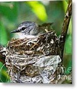 American Redstart Nest Metal Print