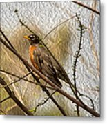American Robin On A Branch Metal Print