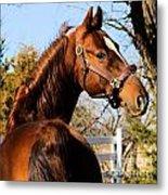 American Saddlebred Stallion Metal Print