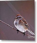 American Tree Sparrow In A Winter Setting Metal Print