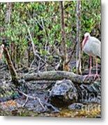 American White Ibis Metal Print