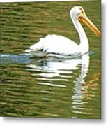 American White Pelican On A Lake Metal Print