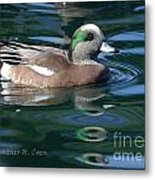 American Widgeon Duck Metal Print