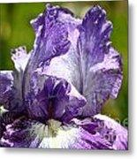 Amethyst Iris Metal Print