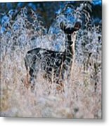 Amid The Frosty Wheat Metal Print