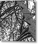 Amidst The Pines Is The Barrens Metal Print