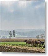 Amish Boy Plowing Metal Print