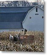 Amish Corn Picking And 1919 Barn Metal Print