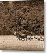 Amish Farmer Tilling The Fields In Black And White Metal Print
