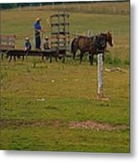 Amish Man And Two Sons On The Farm Metal Print