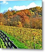 Amish Vinyard Two Metal Print