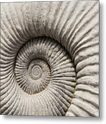 Ammonites Fossil Shell Metal Print
