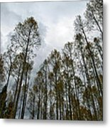 Among Giants Metal Print