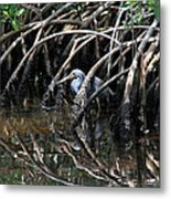 Among The Mangrove Roots Metal Print