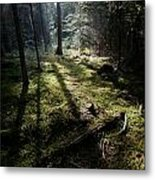 Among The Moss Metal Print
