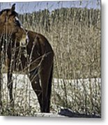Among The Sea Oats Metal Print