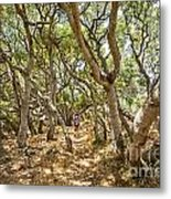 Among The Trees - The Mysterious Trees Of The Los Osos Oak Reserve Metal Print