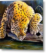 Amur Leopard  Spotted Something Metal Print