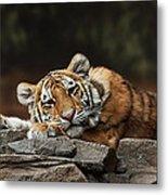 Amur Tiger Twin Metal Print