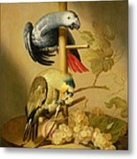 An African Grey And An Orange Winged Amazon Parrot On  A Perch With Grapes Metal Print