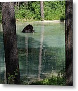 Bear In The Afternoon Metal Print