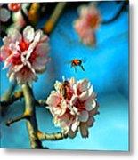 An Almond Pollen Day Metal Print
