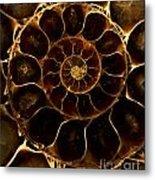 An Ancient Ammonite Pattern  Metal Print