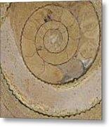 An Ancient Ammonite Pattern Vi Metal Print