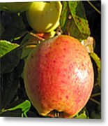 An Apple After Frost Metal Print