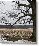 An Appleton Tree And Field In Winter Metal Print