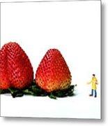An Artist Drawing Strawberries Metal Print by Paul Ge