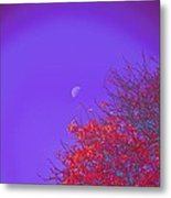 An Autumn Morning Metal Print