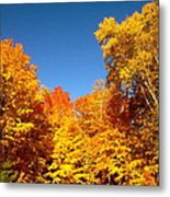 An Autumn Of Gold Metal Print by Danielle  Broussard