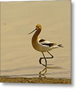 An Avocet Wading The Shore Metal Print