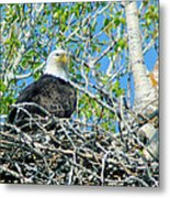 An Eagle In Its Nest  Metal Print