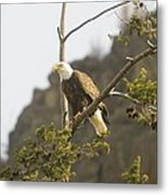 An Eagle In The Spring Metal Print