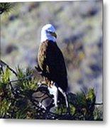 An Eagle In The Sun Metal Print