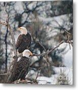 An Eagle Pair  Metal Print