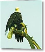 An Eagle Shaking It Off Metal Print