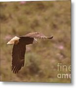 An Eagle Turns  Metal Print
