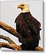 An Eagle's Perch Metal Print