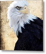 An Eagles Standpoint II Metal Print