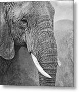 An Elephant Never Forgets Metal Print